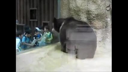 Как мечка се забавлява в зоологическа градина