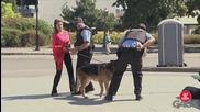 Куче захапва полицай там където не трябва - Скрита камера