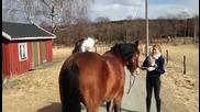 Котка харесва коне
