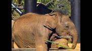 Колко слончето тежи