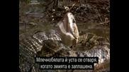 Най - Опасните Животни В Света - Мокасини-северна америка