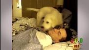 Ядосани кучета и котки будят хора! (голям смях)