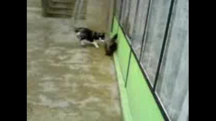 Хъски - Игра С Коте...
