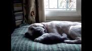 Перфектната любов между котка и куче
