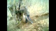 Райчо бута дърво