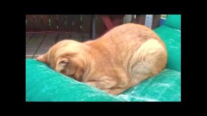 Молеща се котка . * Смях *