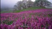 Quietude Giovanni Marradi_flores Silvestres