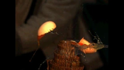 Разсичане на яйце мноого бавно!.