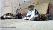 Как да хакнете компютър - Урок от Смешни Котета