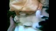 Най - Сладкото Коте Ушко (elin pelin)