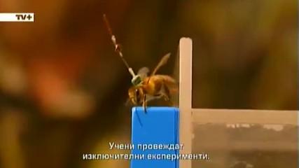 Какво убива пчелите? - документален филм
