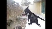 Магаре се люлее на люлка