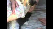 Малки Котки