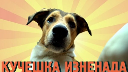 Куче прави приятна изненада за своята приятелка от зоомагазина