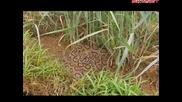 Най-опасните животни в света Индия бг субтитри Част 1