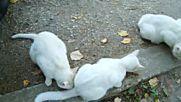 Котешко семейство