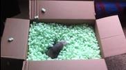 Супер сладки порове се забавляват в кутия