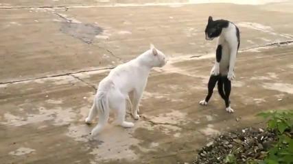Котка или кобра Смях