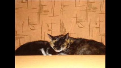 Мойте Котки