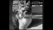 Котките В България