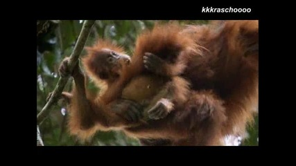 Примати / Primates