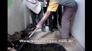 140 килограмова анаконда се опитва да нахапе хора