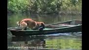 Куче гребе с лодка за да всеме фризби - смях