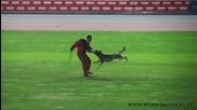 световно първенство за немски овчарски кучета 2010