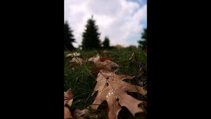 Листья желтые - Есен - Жълти листа