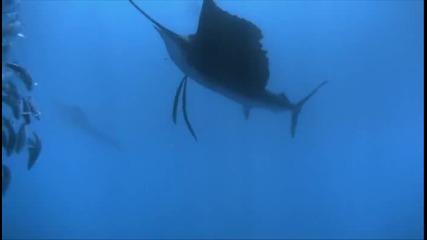 Най - Бързата Риба на Света