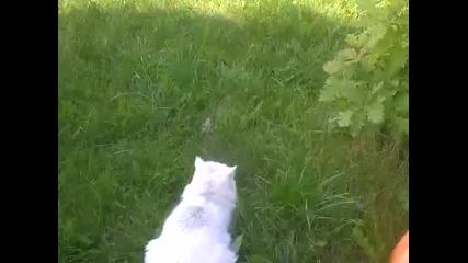 Жаба Мяука Като Котка
