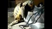 Костенурка опъва маратонка ( Много смях )