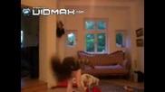 Какво Ли Прави Това Куче Отзад