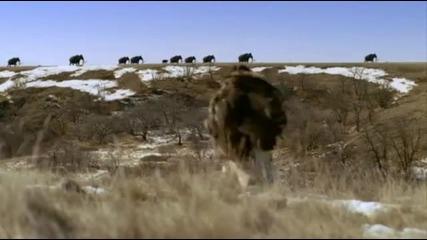 Неандерталец Срещу Носорог