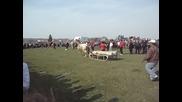 Конно състезание с. Хайредин 24.03.2012г.