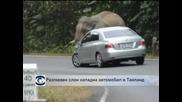 Разгневен слон нападна автомобил в Тайланд