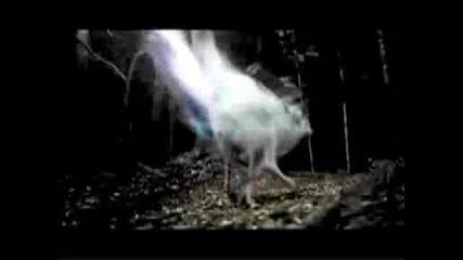 Breaking Dawn Official Trailer