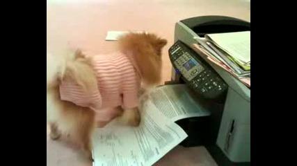 Сладко и пухкаво кученце се бие с принтер