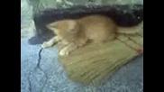 Котка Кючекчийка