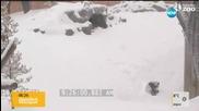 Снежното събуждане на една панда