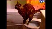 Доста добре обучена котка :) смяхх :d:d
