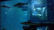 Спалня под аквариум с 35 акули