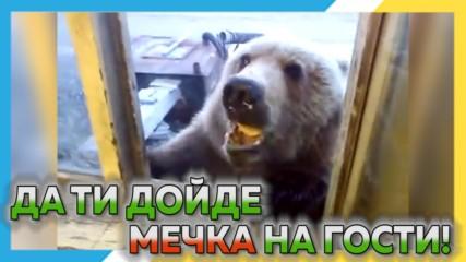 Да ти дойде мечка на гости ! Изцепки със смели играчи срещу руски МЕЧОЦИ !