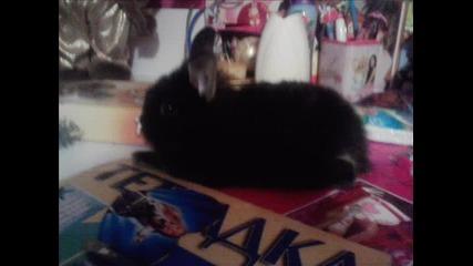 Сладко Зайче на име Бъни