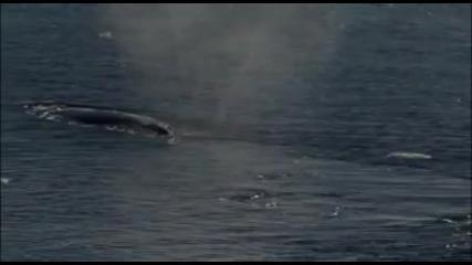 kitove v iujniq krai na okeana