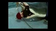 Реклама - John West С Голяма Акула