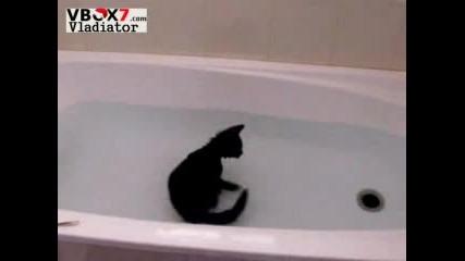 Моята Котка Обича Вода...