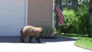 Как инцидентно взаимно може да се изплашат човек и мечка ?