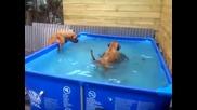 Булдоци изваждат гума от басейн!