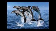 Делфините - най - красивите животни на земята!